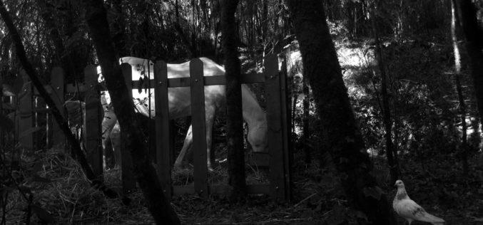 Andrei Tarkovski | Um pássaro sujo de neve