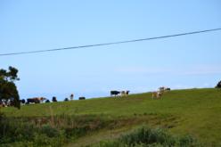 Crise Ambiental | Pegada alimentar: A alimentação e o ambiente