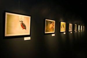 Vila Nova - Famalicão Online | Entrevista: António Cruz . Avifauna da Devesa - aves, pássaros, ambiente, natureza, parque, Parque da Devesa. exposição . Parque Biológivcco de Gaia