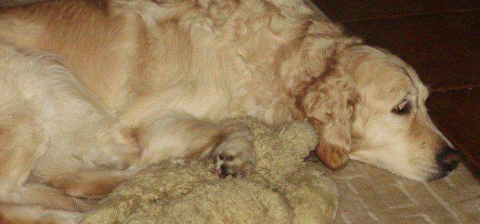 Animais de estimação | Petify.io dá vivas ao seu animal