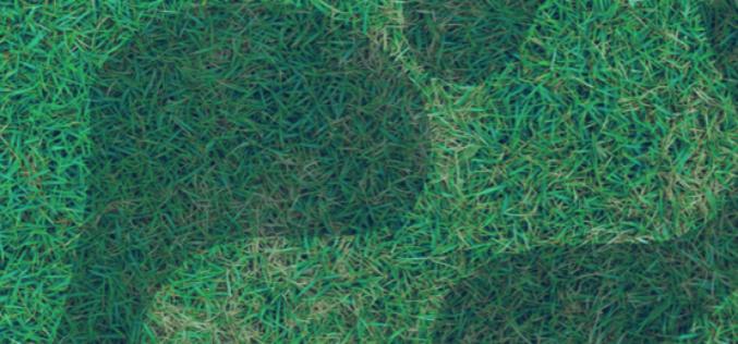 Ambiente | Guimarães Mais Verde, Menos Pegada Ecológica