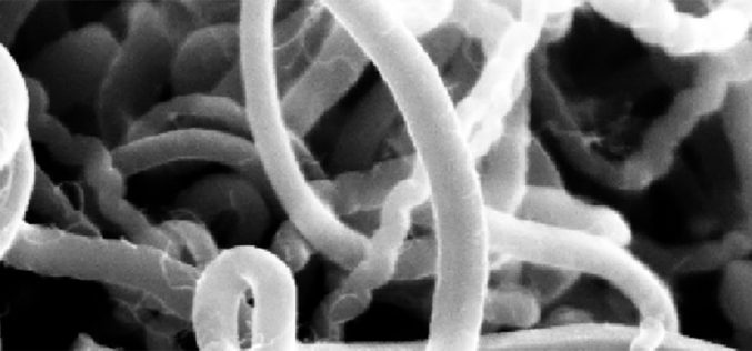 Hi-Tech | Centro Nacional para a Criomicroscopia Eletrónica investigará terapias inovadoras para múltiplas doenças. INL – NanoLab, de Braga, reúne políticos, instituições e empresas