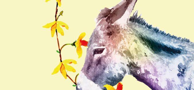 Festas de Maio | Flores & Trocas são fonte de atração de visitantes. Destaque para a Batalha das Flores
