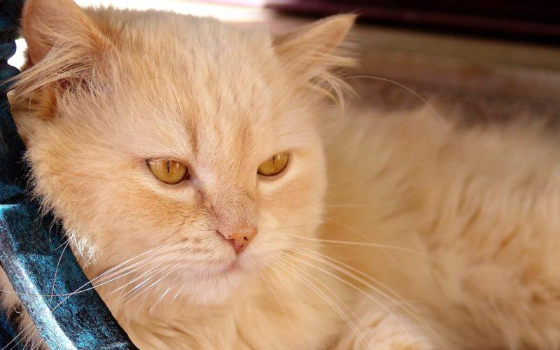 Animais de companhia | Cheque-Veterinário incentiva famílias carenciadas à adoção