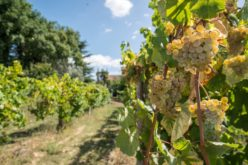 Vinho Verde Fest | Vamos brindar com verde vinho e… Cantar canções de Entre Douro e Minho…