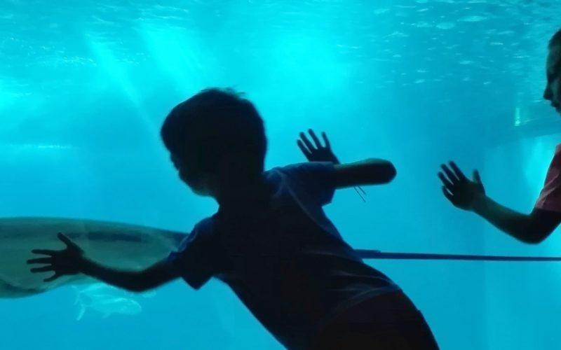 Férias | Sol e Mar. Programa de férias destinado a crianças apoiadas pela CPCJ inicia segunda-feira