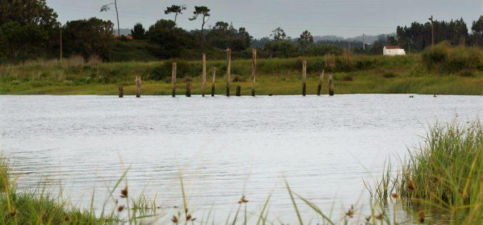 Parque da Devesa | 'Ave Selvagem' termina com visita à foz do rio Ave