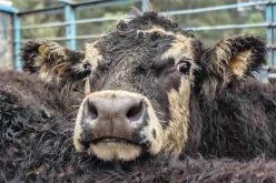 Especismo | Debates pela Libertação Animal no Multiusos da Junta de Freguesia de S. Vicente