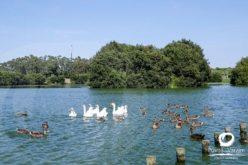 Contaminações ambientais | Biorremediação no Parque da Cidade