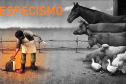 Especismo | Porquê amar um e comer o outro?