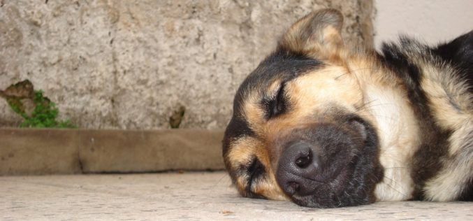 Animais Domésticos | Satisfeito com resultados obtidos na cidade, Braga para Todos promove debates sobre nova lei