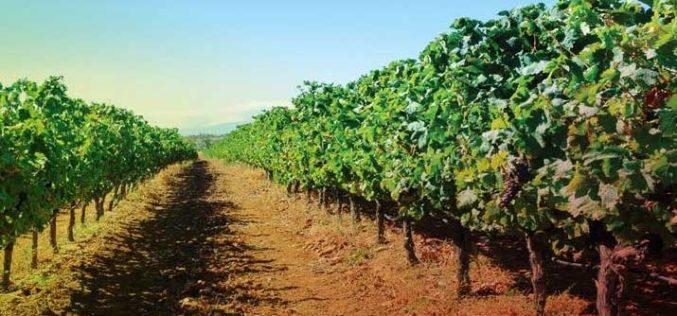 Vinha | Final de outubro é o limite para municípios se candidatarem à eleição da AMPV a Cidade do Vinho 2019
