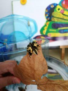 borboletas em Dia do Animal