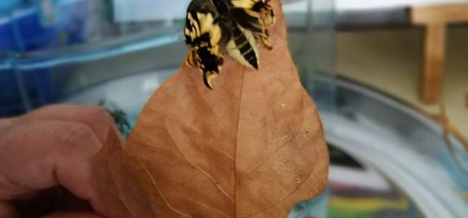 Rhopalocera | No 'Dia do Animal' nasceram borboletas na Gerações