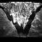 Artes Visuais | Joanie Lemercier apresenta 'Microscapes' no gnration