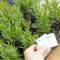 Ambiente | Famalicão promove mega-campanha de adoção de árvores autóctones