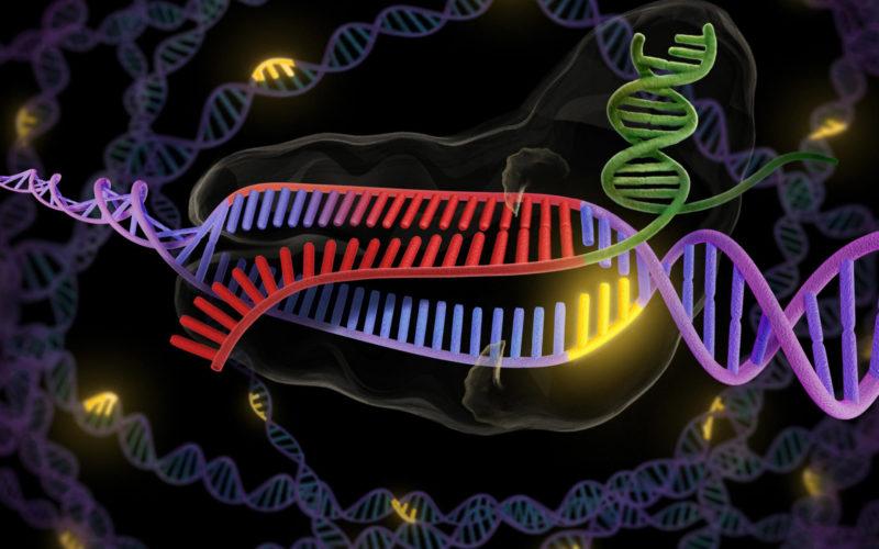 Genética | Humanos resistentes a infeções virais?