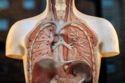 Saúde | Doenças respiratórias matam 2 pessoas por hora em Portugal, revela observatório ONDR