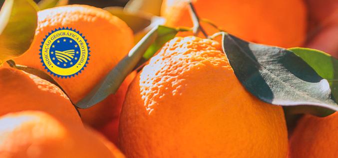 Alimentação | Continente e produtores algarvios parceiros na distribuição de laranja do Algarve
