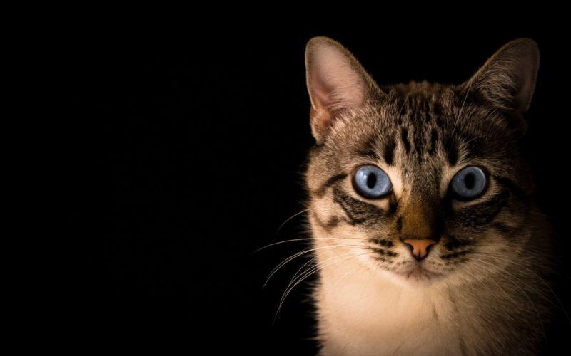 Animalia | Abandoned Pets esterilizou 80 gatos em 4 meses de CED