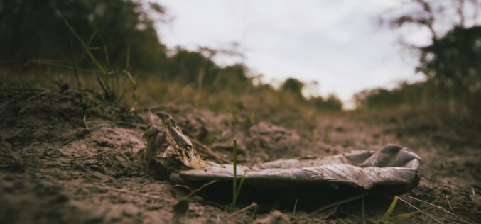 Ambiente | Zero relembra urgência da legislação ProSolos sobre terrenos contaminados esquecida desde há 3 anos