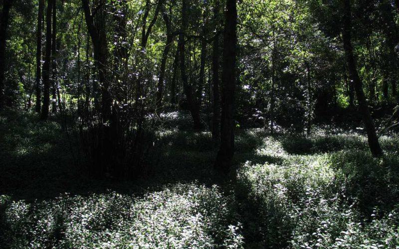 Floresta | 15 de março é data-limite para limpeza de matos