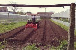 Negócios | Estatuto de Agricultura Familiar beneficia pequenos agricultores e produtores agroflorestais