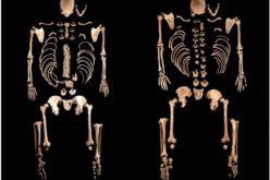 História | Passado genético da Península Ibérica
