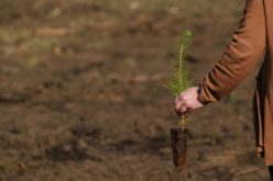 Ambiente | Viana do Castelo pretende plantar 115 mil árvores