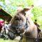 Romaria | Maio é mês de Feira Grande e Festa da Flor em Famalicão