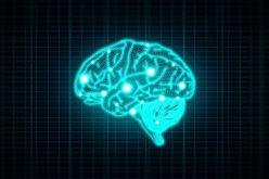 Neurologia | O cérebro funciona em rede para processar informação