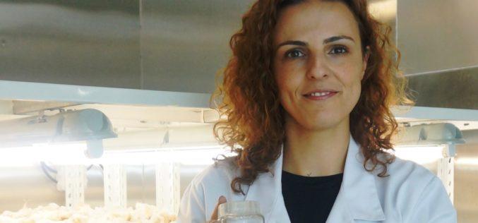 Botânica | Processo-chave na clonagem de plantas identificado na Universidade de Coimbra