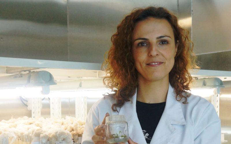 Botânica   Processo-chave na clonagem de plantas identificado na Universidade de Coimbra