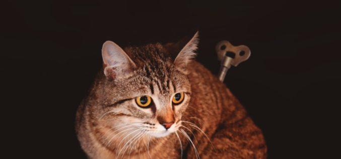 Animalia | Famalicão lança campanha contra abandono