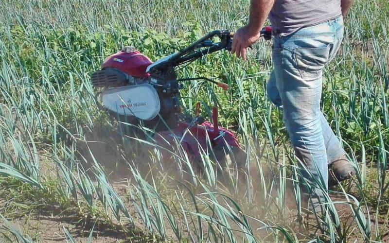 Emprego | INE recruta para Recenseamento Agrícola 2019