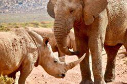 Voar | Hi Fly comprometida em acabar comércio ilegal de animais selvagens