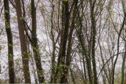 Ambiente | Laboratório da Paisagem promove workshop em torno da gestão e planeamento de Áreas Protegidas