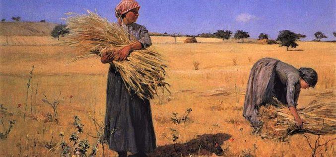 Consciência | Onde há trigo também há joio