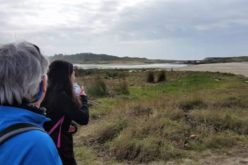 Caminhar | 'Passos de Memória' levam caminhantes por Trilhos de Castro de Moldes em Viana do Castelo