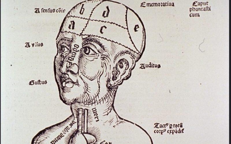 Pensar | A História do Cérebro
