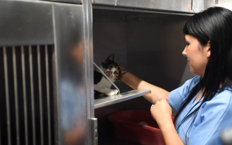 Animalia | Mais de 300 gatos esterilizados em Braga ao abrigo do projeto CED