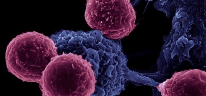 Investigação | Competir contra o cancro
