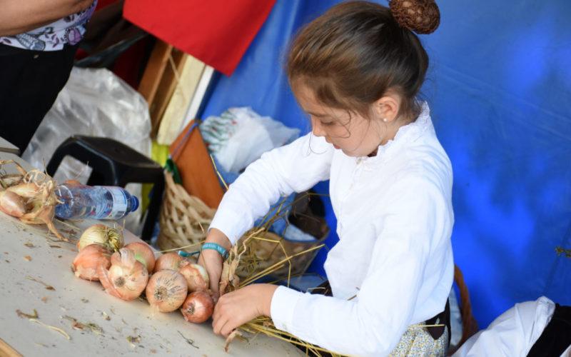 Comunidade | Cebolas fazem a festa em Famalicão