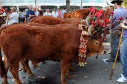 Tradições | Feira Grande de S. Miguel revive tradições ancestrais e promove produtos da terra