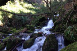 Ambiente | Associação Famalicão em Transição organiza 'Dia de Ação Comum pela Natureza'