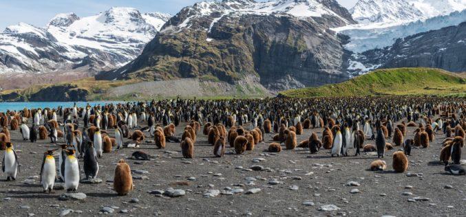 Ambiente | Microplásticos encontrados pela primeira vez em pinguins na Antártida