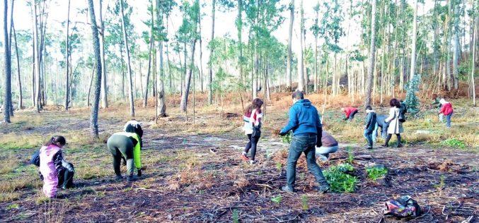 Biodiversidade | Esposende dedicou semana à floresta autóctone