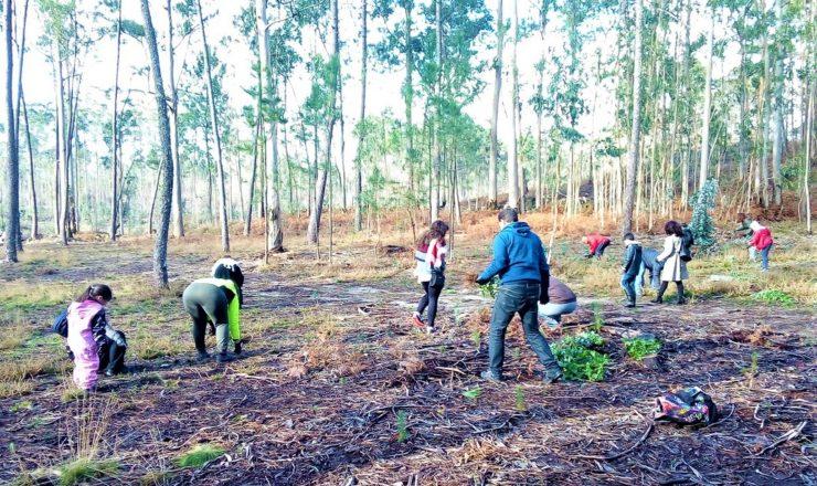 eps floresta autoctone (3)