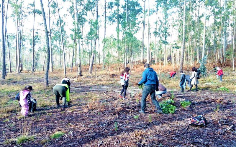 Biodiversidade   Esposende dedicou semana à floresta autóctone
