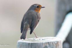 Biodiversidade | PAN quer proibição dos artefactos para captura de aves silvestres